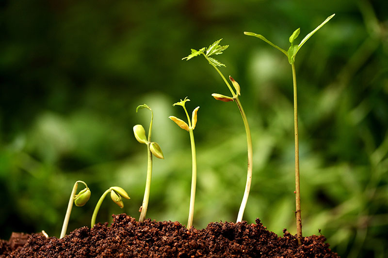 How the Workplace Accountability Index Cultivates Individual and Organizational Growth